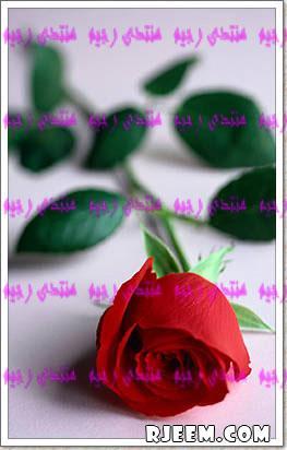 الفردوس 13426003953.jpg