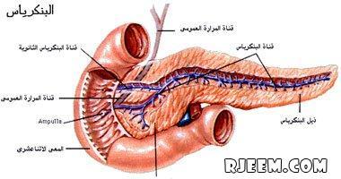 الأطعمة بمضادات الأكسدة الإصابة البنكرياس 13437796851.jpg