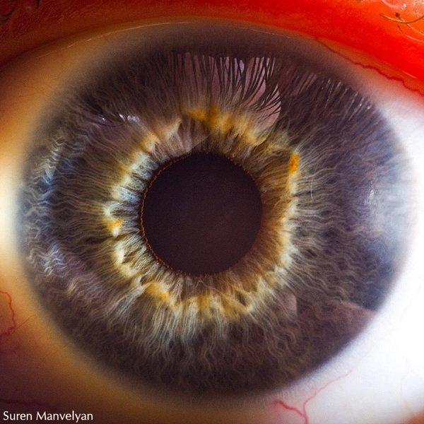 العين....سؤال الطبيعيه والبيئيه 13483429151.jpg
