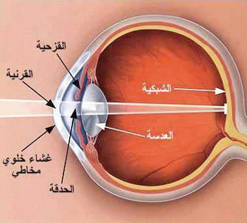 العين....سؤال الطبيعيه والبيئيه 13483446731.jpg