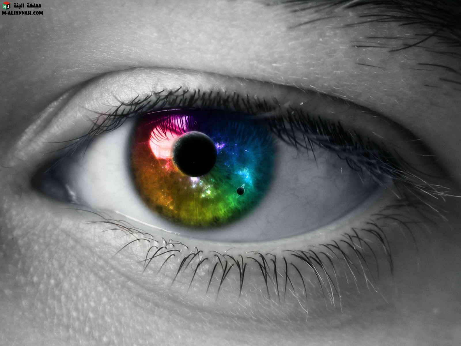 العين....سؤال الطبيعيه والبيئيه 13483481861.jpg
