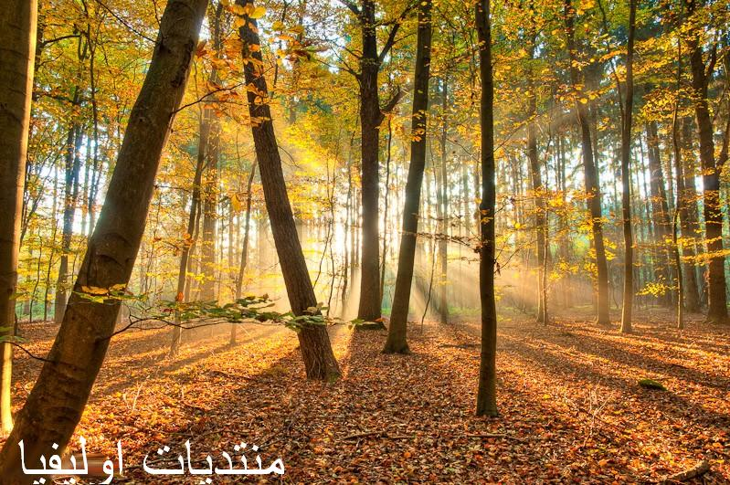 الأشجار 13599643081.jpg