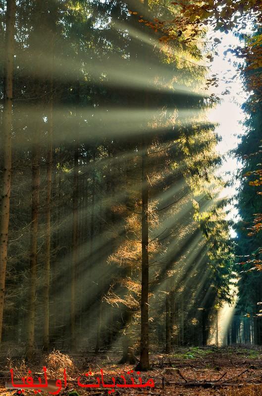 الأشجار 13599643082.jpg