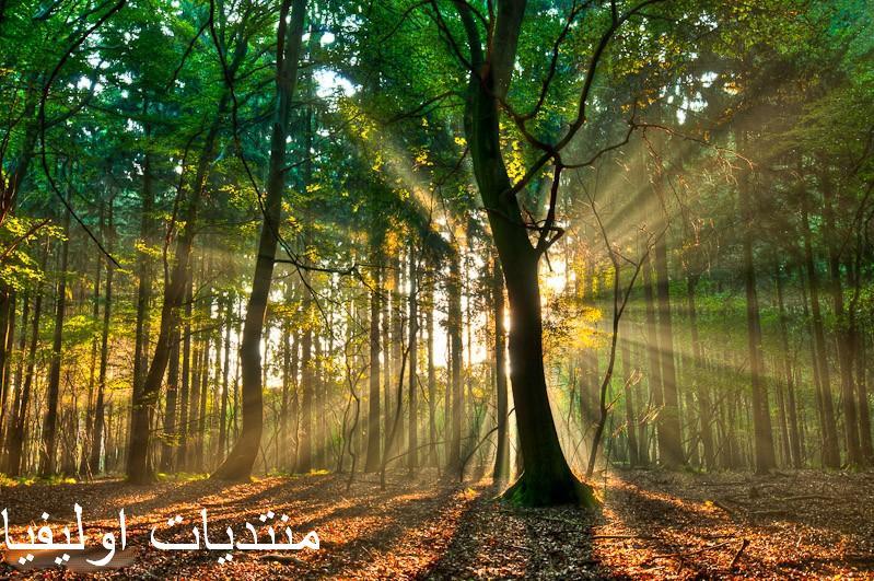 الأشجار 13599643085.jpg