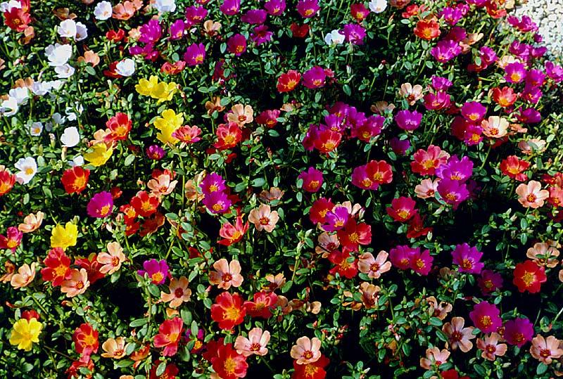 ,,نبات الزهور,معلومات 13680477011.jpg