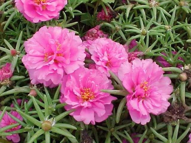 ,,نبات الزهور,معلومات 13680477042.jpg