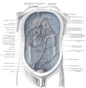 البريتونى,التهاب الصفاق,اعراض ,اسباب البريتونى 13684390951.png