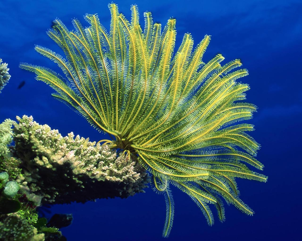 شقائق النعمان البحريه,معلومات عن شقائق البحر بالصور 13686049731.jpg