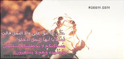 2013 13723608014.jpg