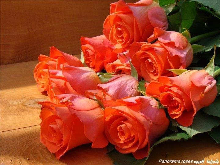 الزيتون 13862580511.jpg