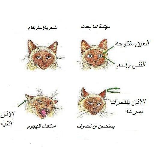 القطط,لهواة 13911551821.jpg