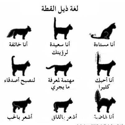 القطط,لهواة 13911551823.jpg