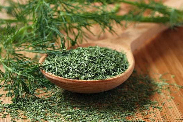 الشبت Dill معلومات عن نبات الشبت وفوائده الطبية 13971357581.jpg