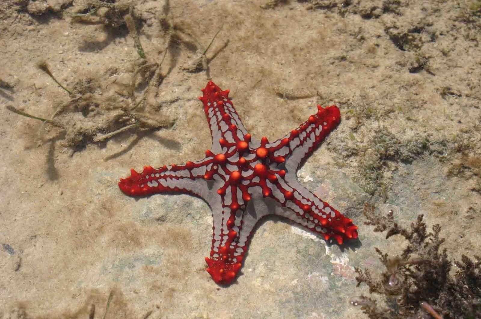 starfish المخلوقات 13975592831.jpg