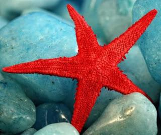 starfish المخلوقات 13975592832.jpg
