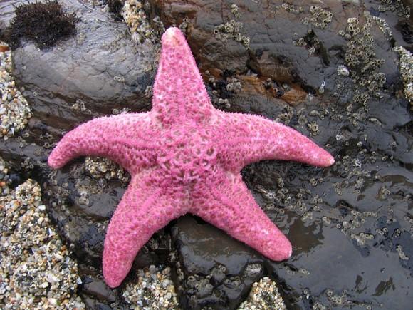 starfish المخلوقات 13975592833.jpg