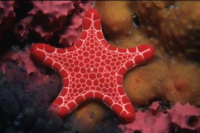 starfish المخلوقات 13975594392.jpg