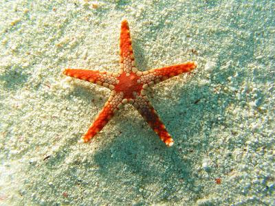starfish المخلوقات 13975597012.jpg