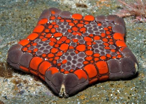 starfish المخلوقات 13975597013.jpg