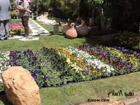 مهرجان الزهور تصويرى