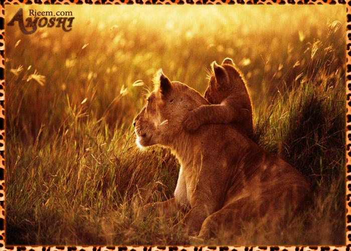 lion & tiger 14130316302.jpg