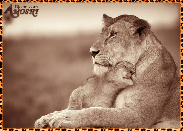lion & tiger 14130316303.jpg