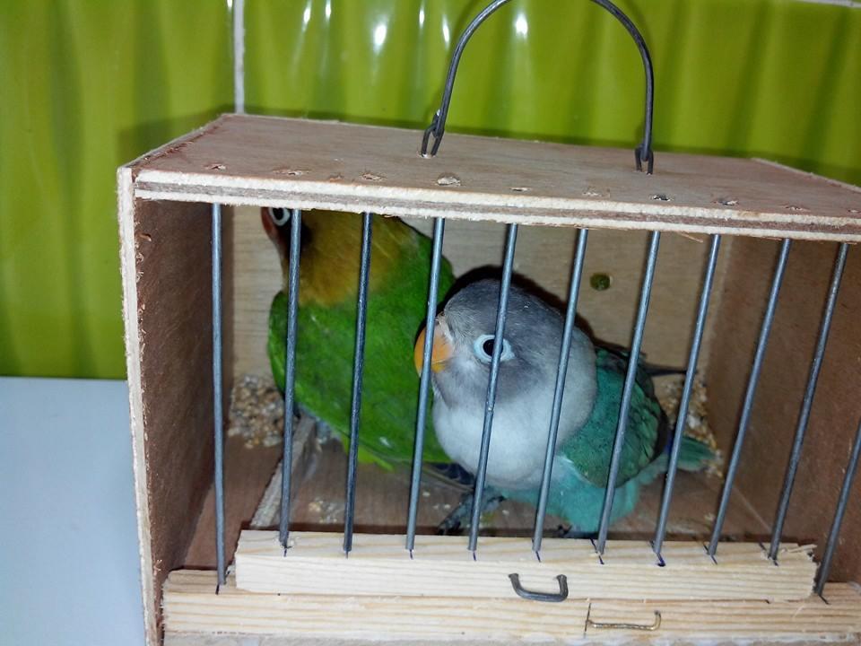 العصافير 14209952161.jpg
