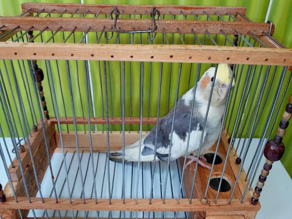 العصافير 14209952163.jpg