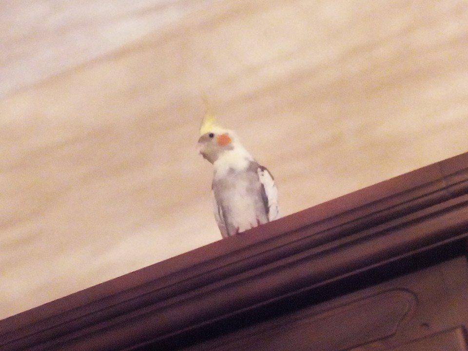 العصافير 14209953851.jpg